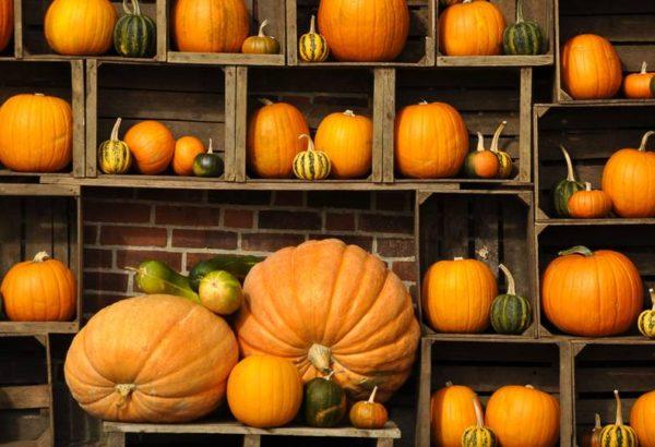pumpkin-wall-16-9